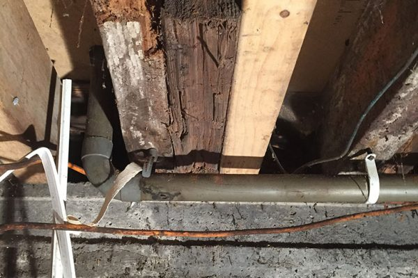 Wood-Rot